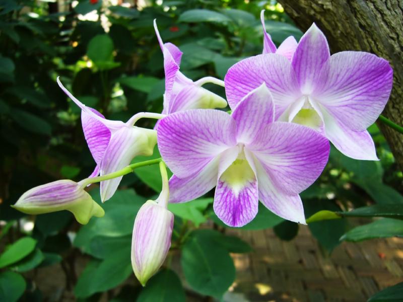 Growing Orchids Hipages Com Au