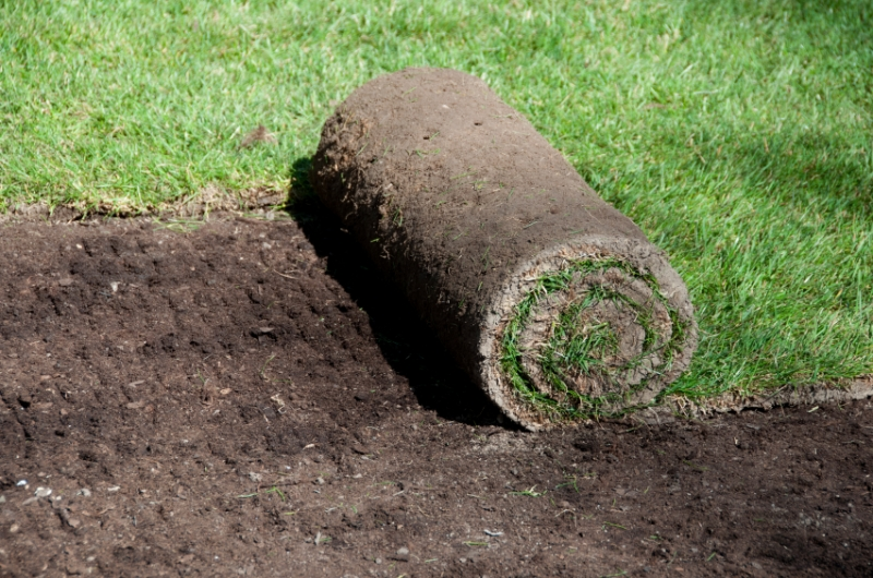 2020 How Much Does A New Lawn Cost Turf Costs Cost