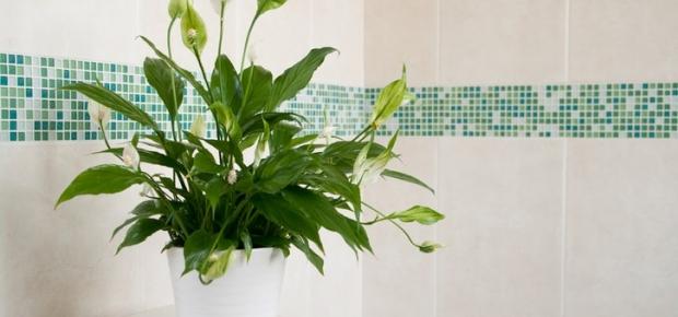 How to create a bathroom garden
