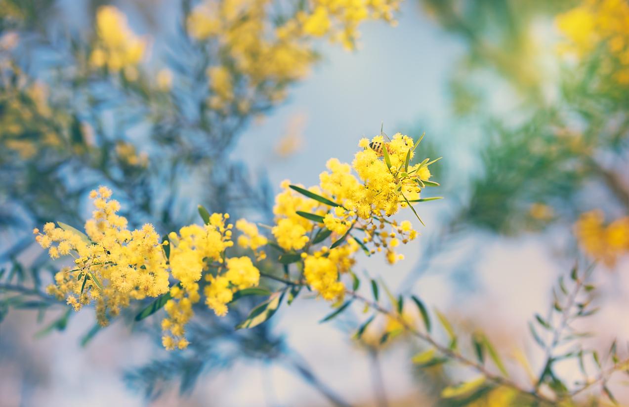 Common Garden Plants Local Recommendations Hipages Com Au