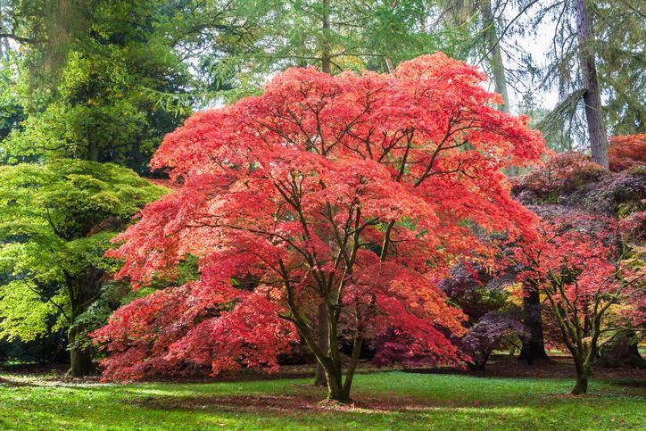 The Best Trees For Autumn Colours Hipages Com Au
