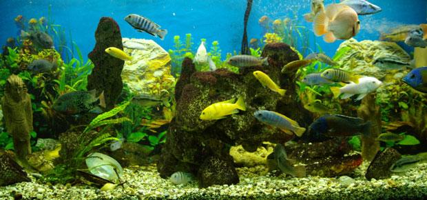 Creating the Ultimate Aquarium