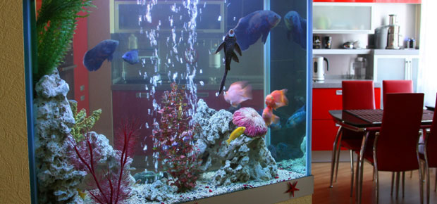 How Much Does a Built In Aquarium Cost?