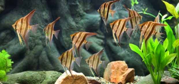 Choosing the Right Fish and Plant Life for Your Aquarium