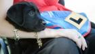 Wonderdogs - Assistance Dogs Australia