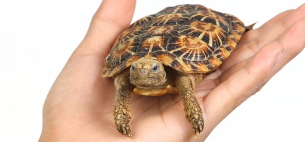 Owning a Turtle