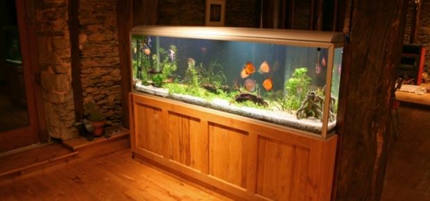 How to Choose an Aquarium Filter