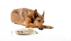 Your Guide to Canine Bloat in Dogs