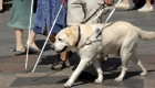 A Day in the Life of a Guide Dog