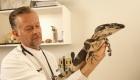 What is an Exotic Animal Veterinarian?