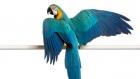 Should I Clip My Pet Parrot's Wings?