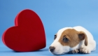 Can Your Dog Help You Find Love?
