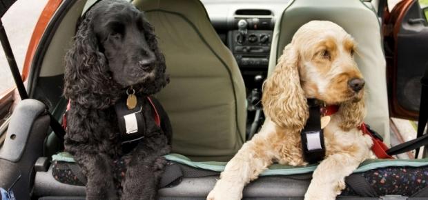 Choosing a Dog Car Seat
