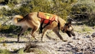 Hero Hounds - Training Search & Rescue Dogs