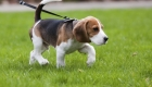What It Takes To Be A Dog Walker