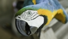 Train your Pet Parrot to Accept a Nail Trim