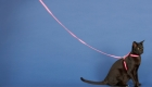 How To Train Your Cat To Walk On A Leash!