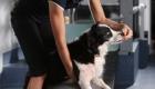 Choosing An Animal Physiotherapist