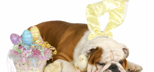Easter and Your Pets