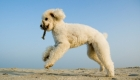 Why Should You Stretch Your Dog?