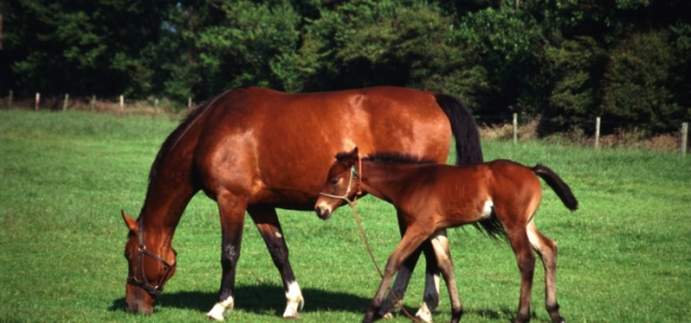 Top health problems of horses