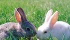 Food Rabbits Love