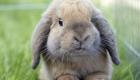 Rabbits Becoming Aggressive