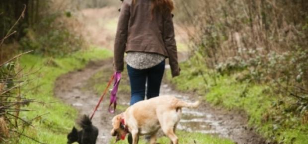 10 Benefits of Adopting an Older Dog