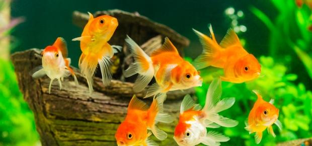 Training Your Fish