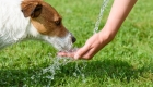 Keeping Your Dog Cool in the Heat
