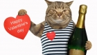 3 Ways to Celebrate Valentine's Day with Your Pet