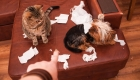 Working with an Animal Behaviorist