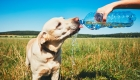 Hydration and Your Pets