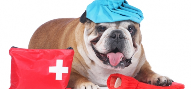 Learning First Aid for your Pet