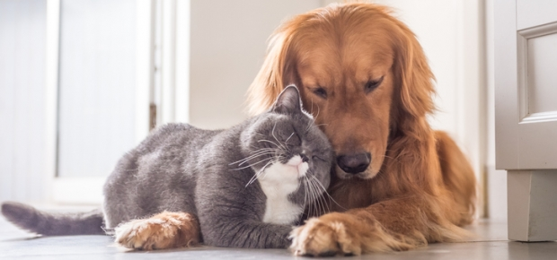 How to Introduce Your Cat to a Dog
