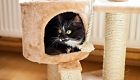 Check out These Furniture Ideas for Your Cat