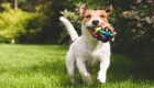 Check out These Interactive Pet Toys