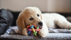 Check out Why Puppies like to Chew