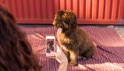 How to Get More Instagram Followers for Your Pet
