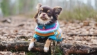 Getting your Dog Winter Ready