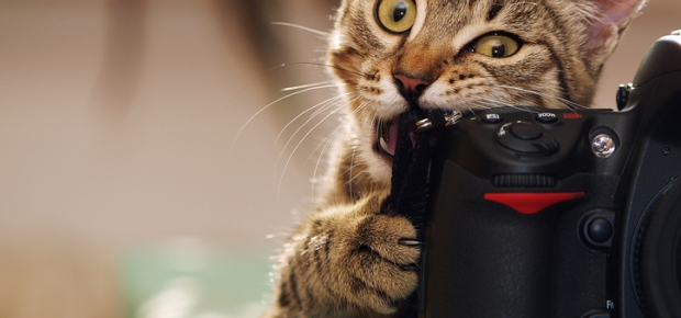 Taking Awesome Photos of Your Pet