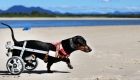 Caring for a Pet With a Disability