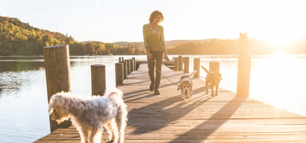 3 Ways to Make Dog Walking More Fun