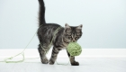 Check out These Do It Yourself Cat Toys