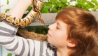 Owning a Pet Python