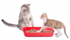 AI Kitty Litter Trays