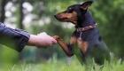 Pet Promise Day - September 16