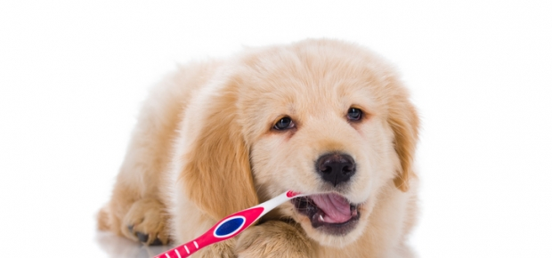Dental Care Options for Your Dog