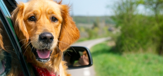 Long Car Trips for Dogs