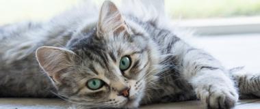Managing Cat Fur Around the House